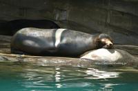 夏の動物園 1 - 一瞬をみつめて