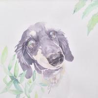 Brilliant - 犬の絵、描きます < Eyes of a Dog >