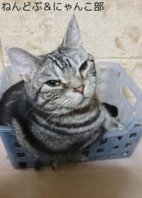 もっちり猫 にゃんこ部更新 - デコデコスイーツ ねんどぶ & にゃんこ部