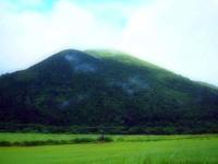 「三瓶小豆原埋没林公園」は原始の森だった!(追記) - つれづれ日記