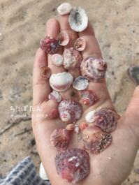 ちりぼたん - on the shore