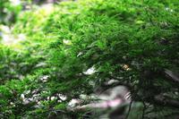 手向山が眩しい--北鎌倉円覚寺にて - くにちゃん3@撮影散歩
