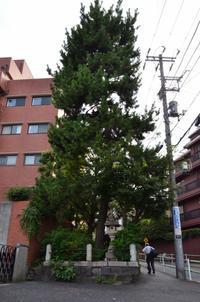 鬼平を歩く『麻布一本松』~麻布の坂巡り - kenのデジカメライフ