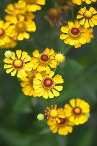 黄色と朱 - tokoのblog