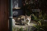 水俣の猫、こっちを向く - Mark.M.Watanabeの熊本撮影紀行