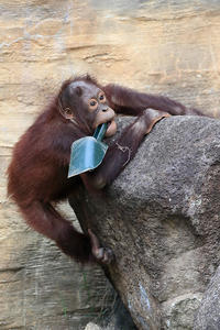 9月5日(火) 活性化 - ほのぼの動物写真日記