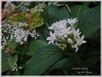 Entre las plantas del otoño... - Garden Diary