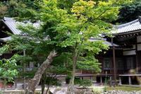 円覚寺の紅葉--秋が楽しみ - くにちゃん3@撮影散歩