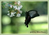 神秘的蝶々さんとの出会い 林業試験場樹木公園 canon 7D のはず? - ひとみの興味津々でございます!日々のブログ