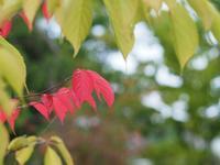 秋の気配 - azukki的.