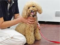 ドッグマッサージ 9/5 - SUPER DOGS blog