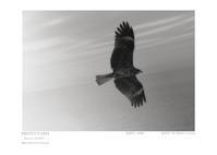 Portfolio 052 - Shou's portfolio