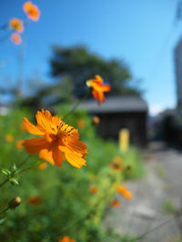 秋の予感 - 節操のない写真館