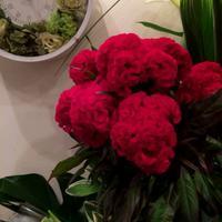 秋の花 - 花だより 海浜幕張駅 花屋 テーブルコサージュ・ラボ~フラワーショップ~