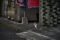 水俣の兄弟子猫 - Mark.M.Watanabeの熊本撮影紀行