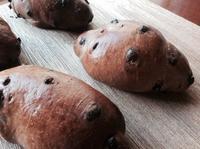 チョコチップバターロール - 八女市の蔵でパンを焼く