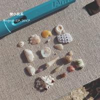八丁浜の微小貝系 - on the shore