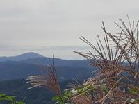 初秋のお散歩 山の野花 - E*N*JOY