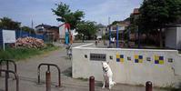 Vol.1231 駒岡岩瀬公園 - 小太郎の白っぽい世界