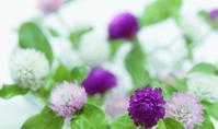 美味しそうな花 - 「美は観る者の眼の中にある」