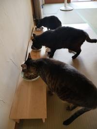 朝ご飯、いただきまーす - ご機嫌元氣 猫の森公式ブログ