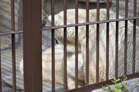 ほっきょくぐまのいちにち 2017/09/03 - メタのマクロ視点な奇跡なんて白熊の為