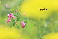 初秋の色 - ジージーライダーの自然彩彩