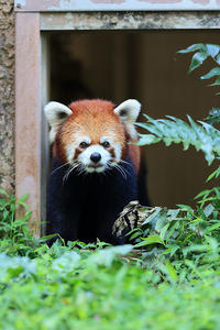 9月7日(木) 桃花 - ほのぼの動物写真日記