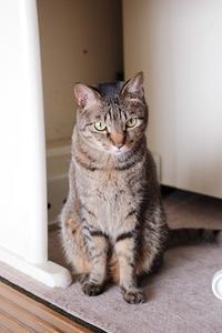 癒してくれた猫たち と 猫の開き - きょうだい猫と仲良し暮らし