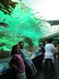 カナダ、オンタリオ州へ④:3日目 トロントの水族館 パート2 - 我が家は国連家族