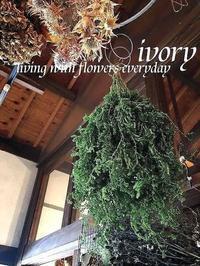 【竹取物語』 -  Flower and cafe 花空間 ivory (アイボリー)