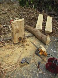 サガリバナの木 - TI.クラフト