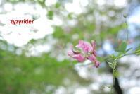 秋の始まり - ジージーライダーの自然彩彩