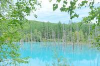 青い池@北海道 - カメラをもってふらふらと