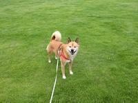 サッカー犬abby - abby & zack