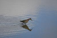 ため池巡り - いい男の「歩々是道場」