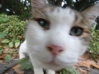 え!? なになに写真撮ってるの~? - ネコと裏山日記