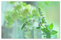 爽やかグリーン。 - Yuruyuru Photograph