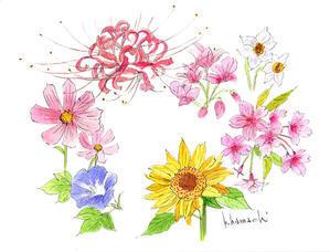 花のイラスト - 浜地克徳のスケッチファーム