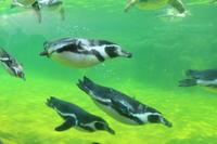 葛西臨海公園☆7 葛西臨海水族園のお魚さんたち ペンギンさん - Let's Enjoy Everyday!