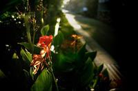 花の香りのする場所 - ぴんの助でございます