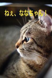 にゃんこ劇場「鼻ぺちゃの特技」 - ゆきなそう  猫とガーデニングの日記