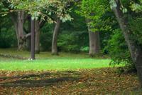 枯れ落ち葉と緑の芝 - MAKO'S PHOTO