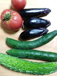 もらった野菜で収穫ごはん ~プロのトマトときゅうり~ - 日々ニコニコ