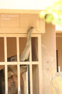 夏の動物園 3 - 一瞬をみつめて