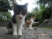 野良ちゃん - ネコと裏山日記