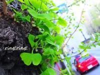 緑の発展運   - Natural charge