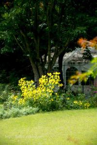 英国庭園(3) - Tullyz bis /R-D1ときどきM