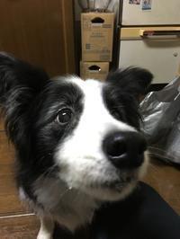 食い気 - 犬とお散歩