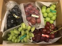 秋です!葡萄🍇の季節です。 - Piccola felicita